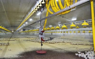 Der Einstreuroboter Sentinel leistet einen aktiven Beitrag zum Tierwohl, zur Wirtschaftlichkeit der Mastbetriebe und zur Produktqualität für den Endverbraucher